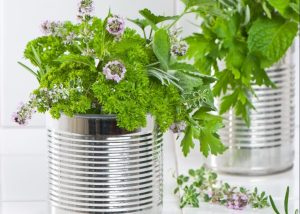 7301551 - fresh herbs in recycled tin cans with pestle and mortar in the kitchen