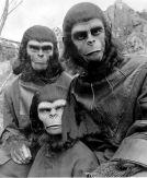 CIBASS El planeta de los simios tres