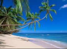 Can It Be Saturday Now .com ? - Palm tree beach