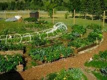 Permaculture Community Garden Design