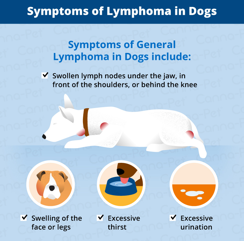 Lymphoma in Dogs   Canna-Pet
