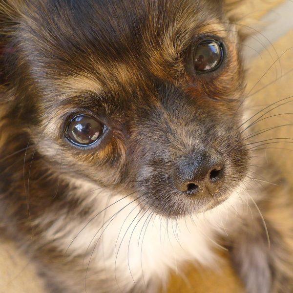 Encephalitis Brain Inflammation In Dogs Canna-pet