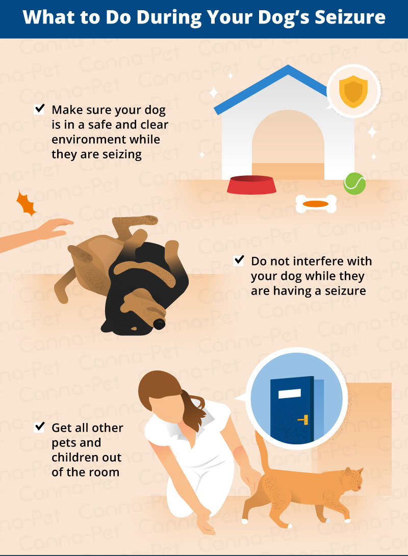 What to Do After Your Dog Has a Seizure  CannaPet