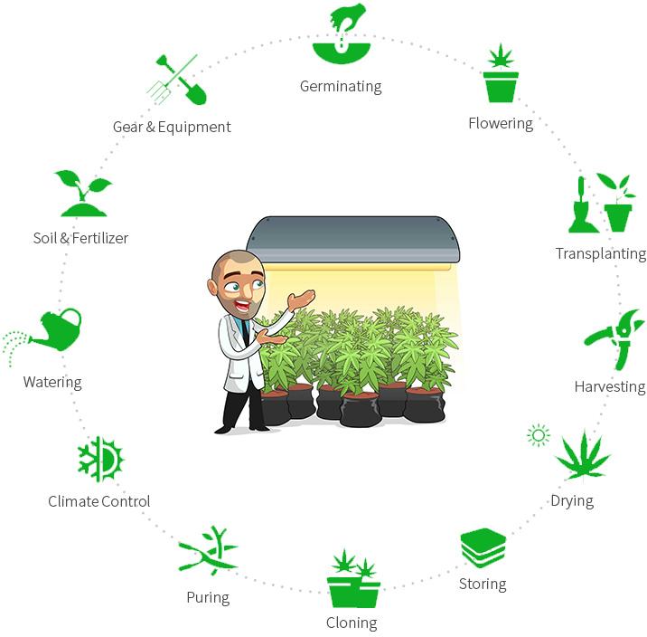 Cannabis Seeds Grow Course. COMING SOON!!