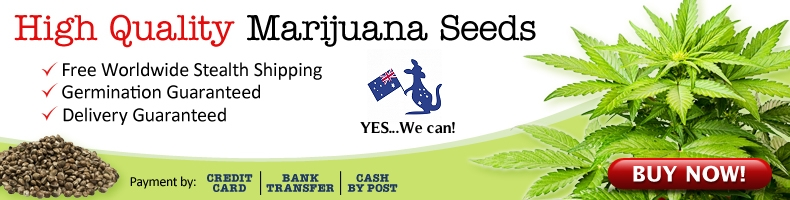 Buy Cannabis Seeds In Australia