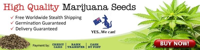 Buy Cannabis Seeds In Australia
