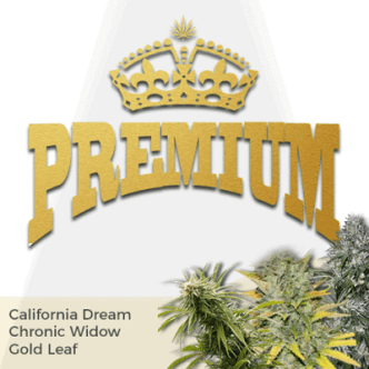 Premium Mixpack Cannabis Seeds
