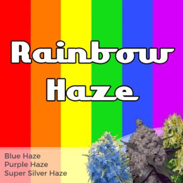 Rainbow Haze Mixed Seeds