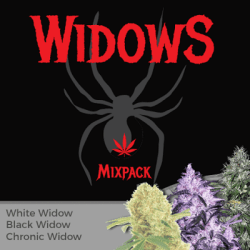 Widow Seeds Mixpack