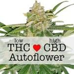 Critical Mass Autoflowering CBD Medical Seeds