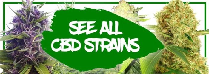 CBD Medical Seeds For Sale In Australia