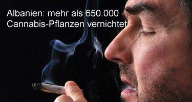 Cannabis in Albanien