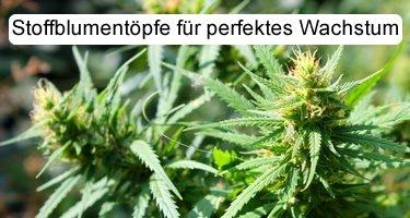 Cannabisanbau mit Stofftöpfen