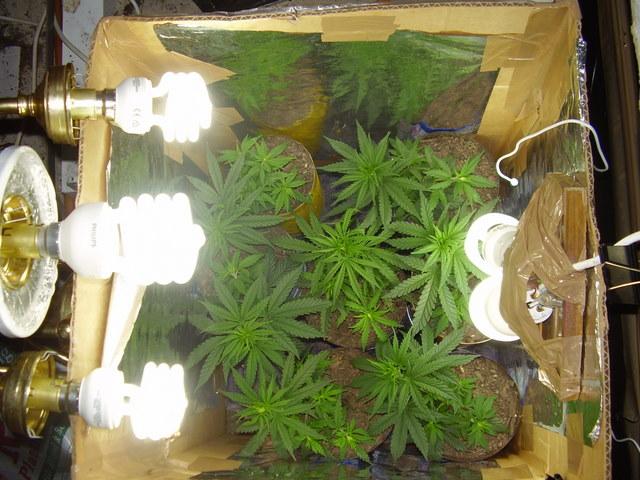 CFL Grow Veg to Flower  Lighting and Ventilation