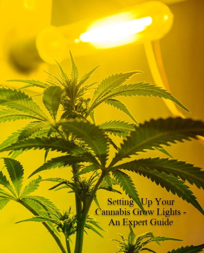 A GUIDE TO MARIJUANA GROW LIGHTS