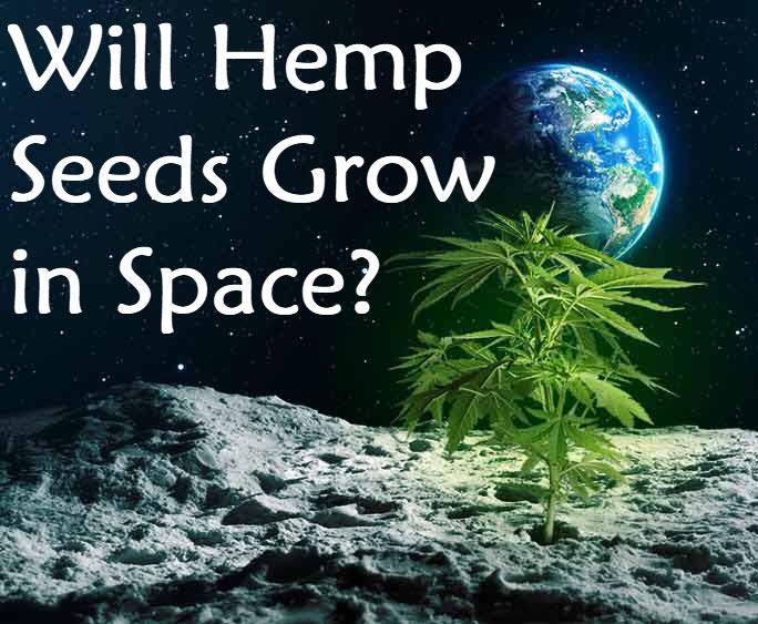 HEMP SEEDS IN SPACE