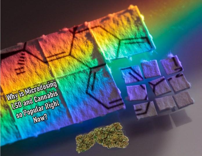 MICRODOSING LSD AND CANNABIS