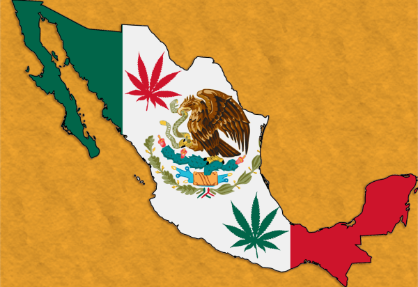 Doctor asks Mexico to Embrace its Endocannabinoid System