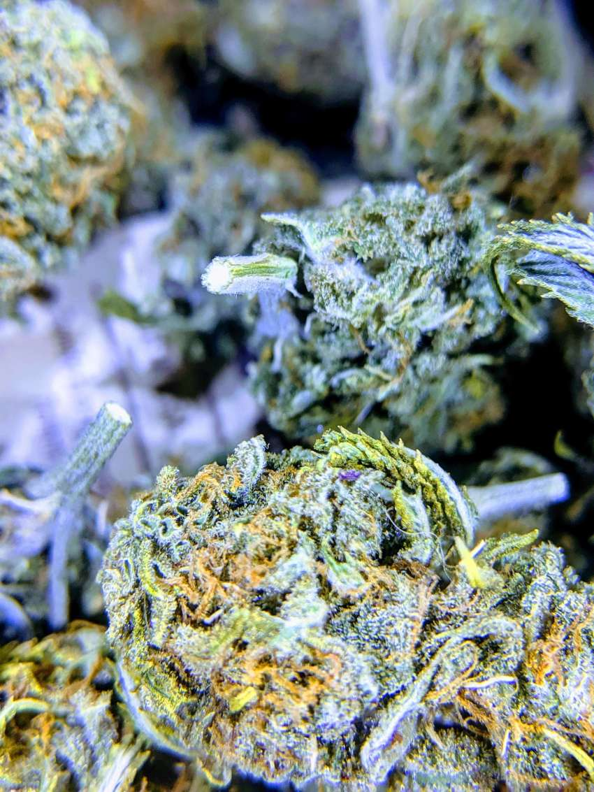 how to store cannabis correctly, how to store cannabis correctly, how to store weed properly, how to store marijuana properly, how to store cannabis, what container is best for cannabis, how to keep an ounce fresh, freezing fresh bud, cannador, what happens if you put bud in the freezer, how to store kief long term, storing hemp flower, miron jars, best container to keep cannabis fresh, keep weed freshwhat is the endocannabinoid system? how does the endocannabinoid system work