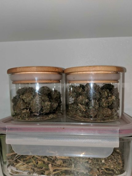 how to store cannabis correctly, how to store weed properly, how to store marijuana properly, how to store cannabis, what container is best for cannabis, how to keep an ounce fresh, freezing fresh bud, cannador, what happens if you put bud in the freezer, how to store kief long term, storing hemp flower, miron jars, best container to keep cannabis fresh, keep weed fresh