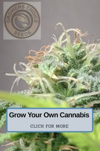 grow your own cannabis, cheap cannabis seeds online, cheap cannabis seeds canada, cheap seeds usa, cheap weed seeds, marijuana seeds online,