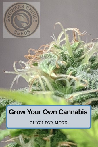 grow your own cannabis, growers choice seeds, cannabis groweing, buy seeds online, buy seeds california, cali seeds online, cannabis growing, electricity usage for growing cannabis.