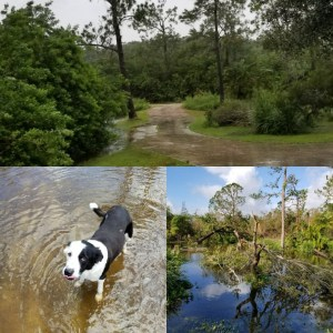 Tim's driveway before and after Irma with Tim's dog who sheltered with Tim & is fine