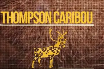 thompson caribou