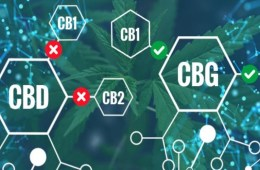 Can CBD and Cannabigerol (CBG) create A Cannabinoid Powerhouse?