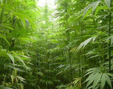 Cannabis Company Revolution Enterprises Names Tony Hunter as Board Chairman