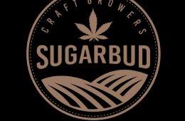 Sugarbud