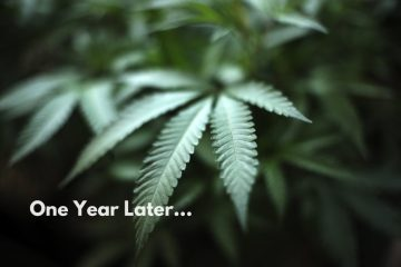 Cannabis Legalization, One Year Later - The Good, The Bad & The Unknown