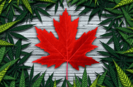 7 Canadian Cannabis brands to follow