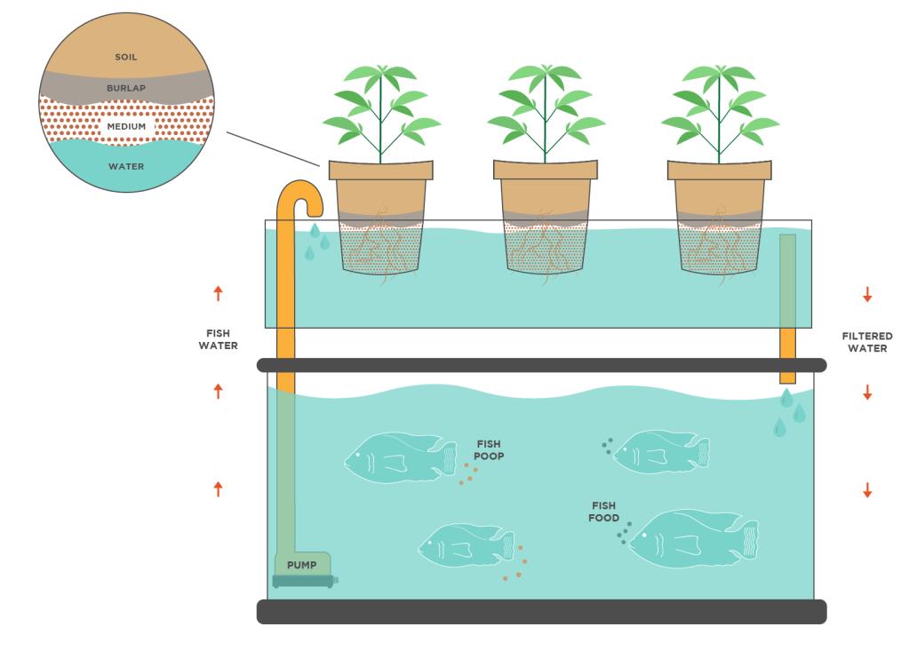 fish and marijuana