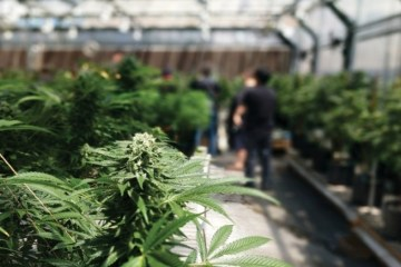 bc announces new cannabis sales program