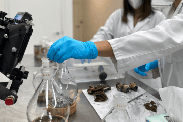 Numinus Announces First Legal Harvest Of Psilocybe Mushrooms