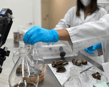 Numinus Announces First Legal Harvest Of Psilocybe Mushrooms
