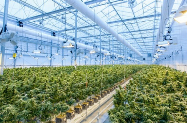 Is Canopy Growth the Cannabis Stock to Buy Right Now?