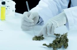 CBDH-cannabinoid-for-pain