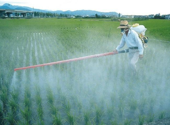 pesticides on cannabis 2020 recap