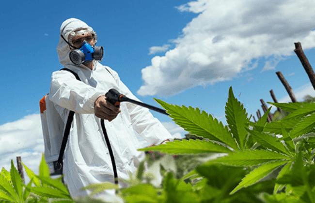 pesticides used on cannabis