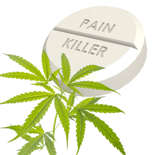 cannabis and pain killers