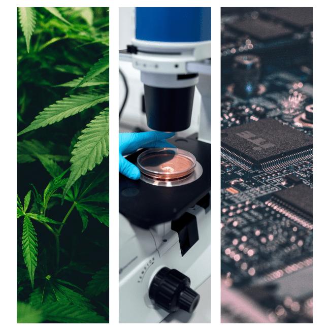 AI and Cannabis Cultivation