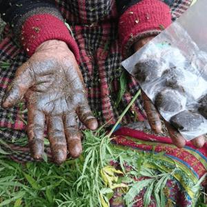 Malana Cream, Himachal Pradesh