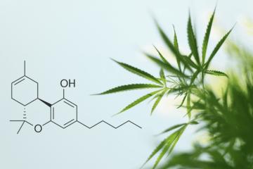 Expert Cannabis Crossword Alert - Delta-8-THC