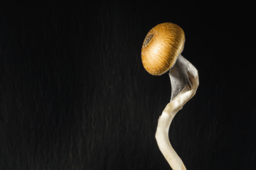 End of Psilocybin Prohibition Health Canada receives proposed regulations
