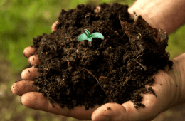 Best soil for outdoor cannabis - How to make a pathway soil bank (1)