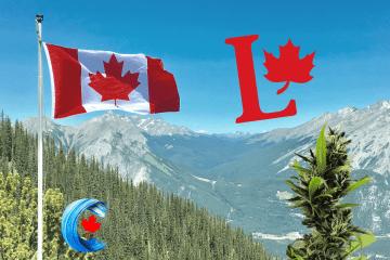 Medical-cannabis-green-liberal-minority