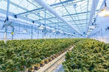Modern Cannabis Cultivation