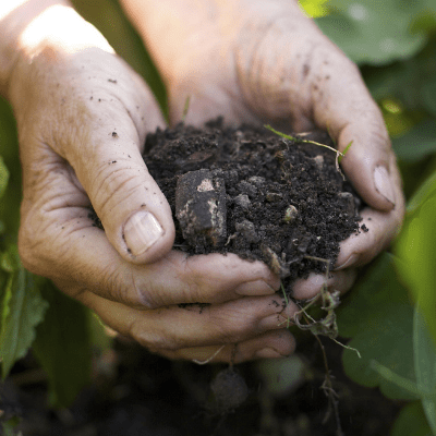 best soil for growing cannabis outdoors
